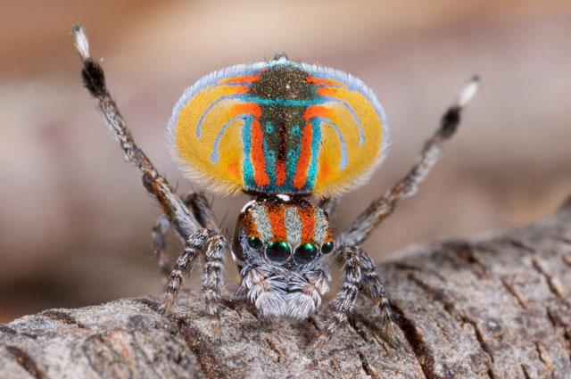 Топ 10 Самые красивые пауки в мире