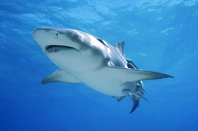 Топ 10 Самые опасные рыбы в мире