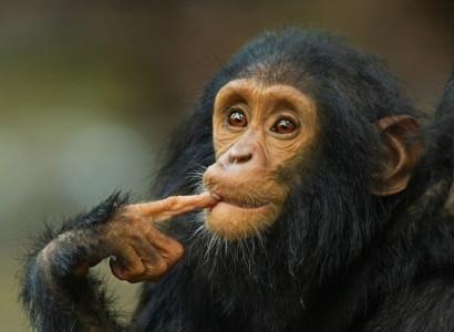 Самое умное животное в мире