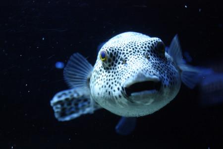 Самые опасные рыбы в мире