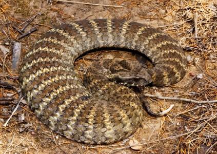 Топ 10 Самые ядовитые змеи планеты