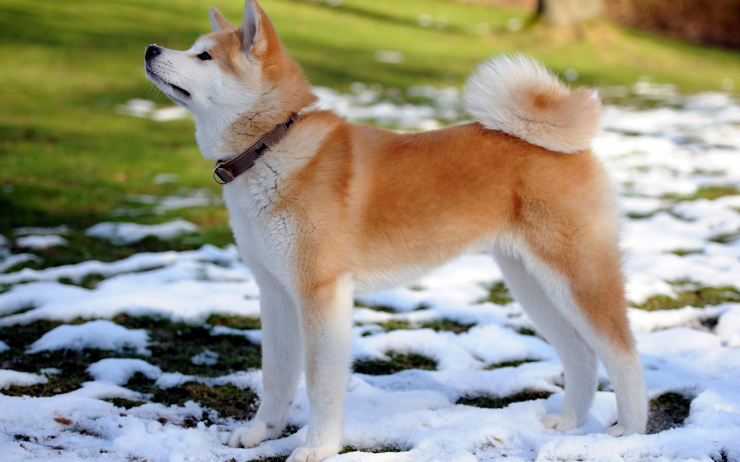 самая порода собак в мире фото порода