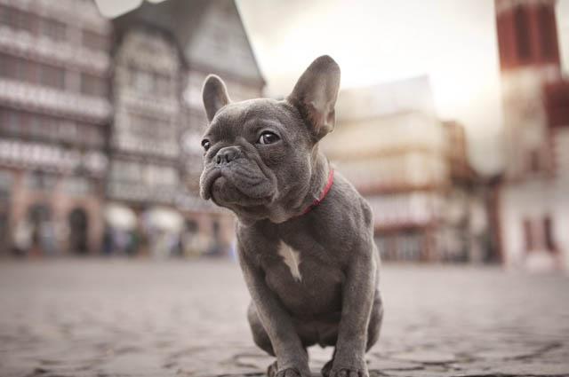 Топ 10 Самые маленькие породы собак в мире