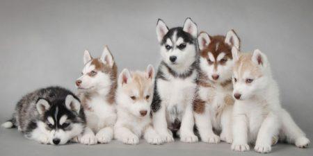 Топ 10 Самые красивые породы собак в мире