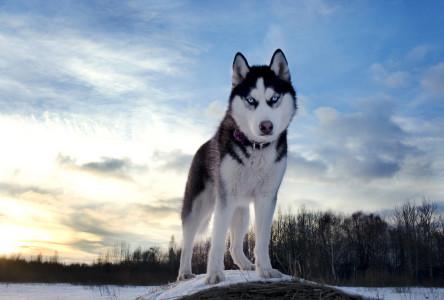 Самая красивая порода собак в мире