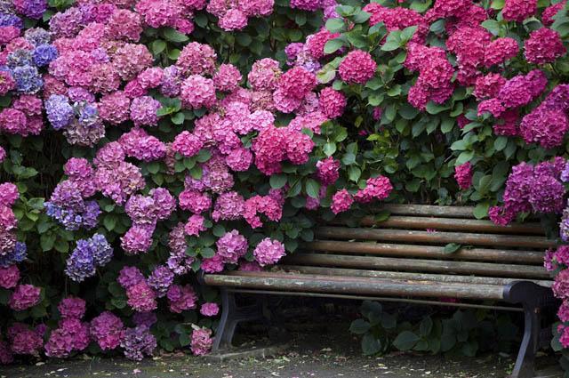 Самые красивые цветы на планете. Фото и название