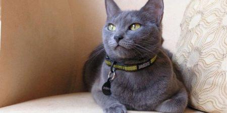 рейтинг самых дорогих пород кошек в мире