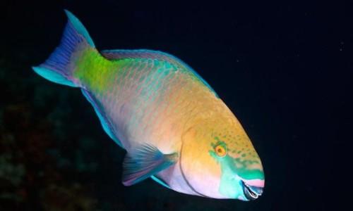 10 самых красивых рыб в мире