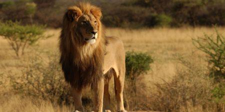 10 самых быстрых животных в мире
