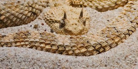 Самые необычные змеи в мире
