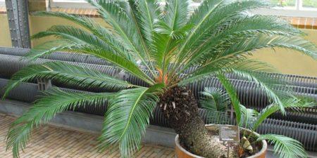 Самые опасные комнатные растения для человека
