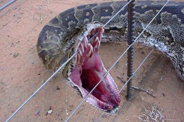 Самые большие змеи в мире по весу