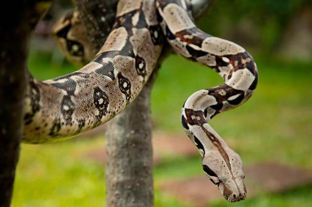 Самые длинные змеи планеты
