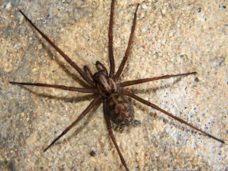 Какой паук самый быстрый в мире