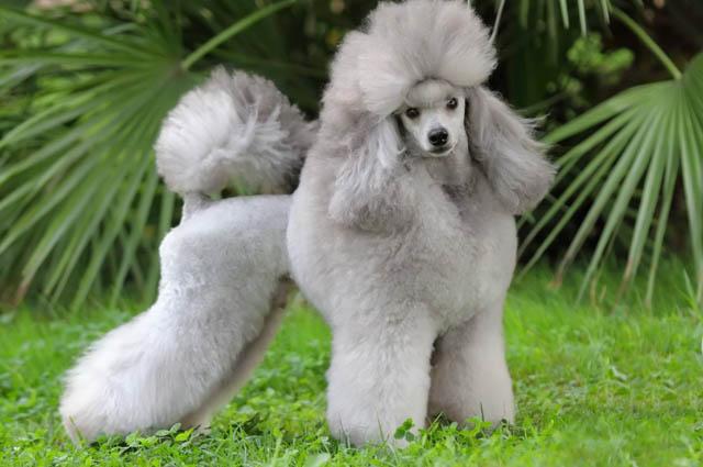 Топ 10 породы собак для детей