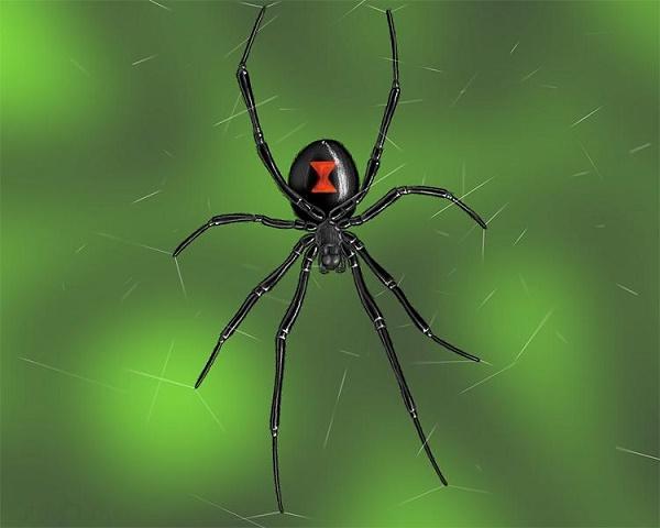 Черная вдова. Самые ядовитые пауки