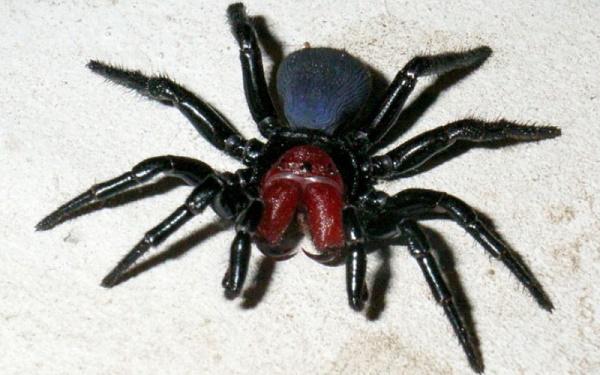 Топ 10 самых ядовитых пауков
