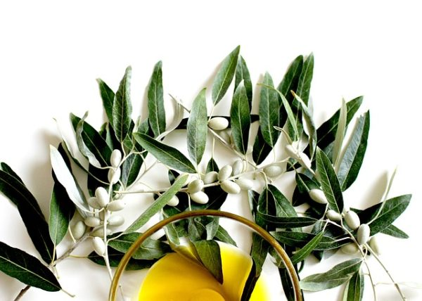 Оливковый лист