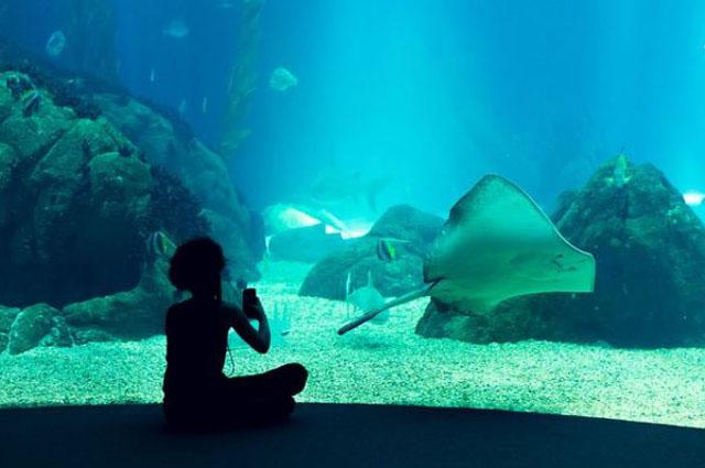 Топ 10 самых больших океанариумов в мире