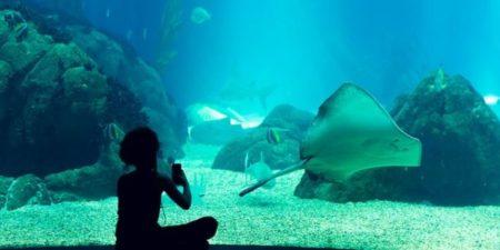 oceanarium-2048720_640