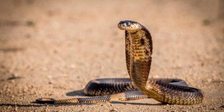 Рейтинг смертельно опасных животных планеты