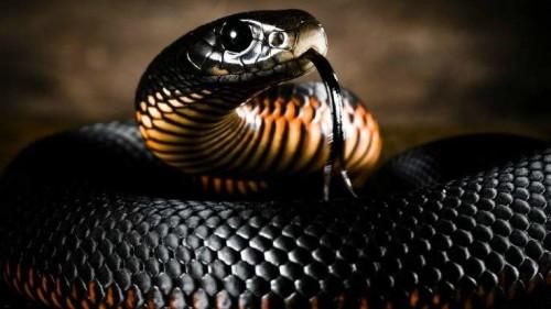 Самые опасные змеи на планете