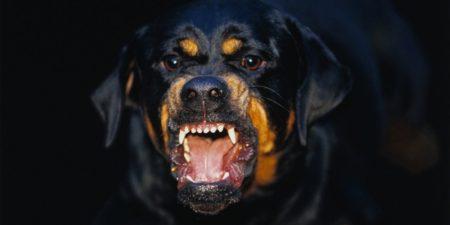 Топ 10 Самые опасные породы собак в мире