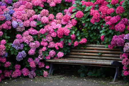 Топ 10 Самые красивые цветы на планете