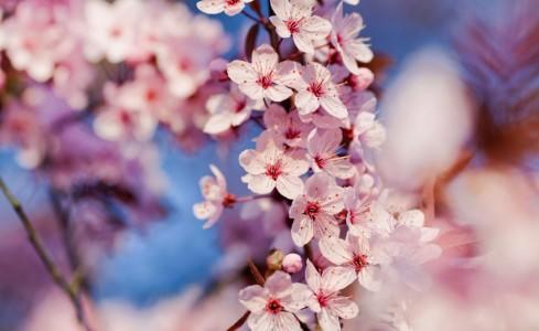 Самый красивый цветок на планете