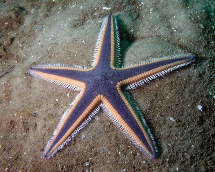 Самые красивые морские звезды в мире