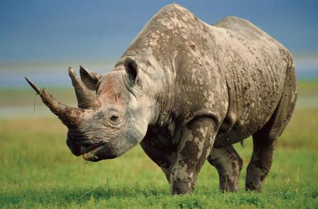 Самое сильное животное в мире