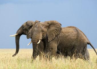 10 самых сильных животных в мире