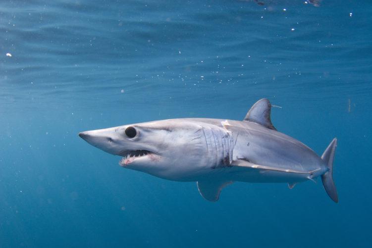 Самые большие акулы в мире