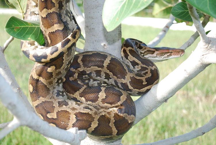 Самые крупные змеи в мире