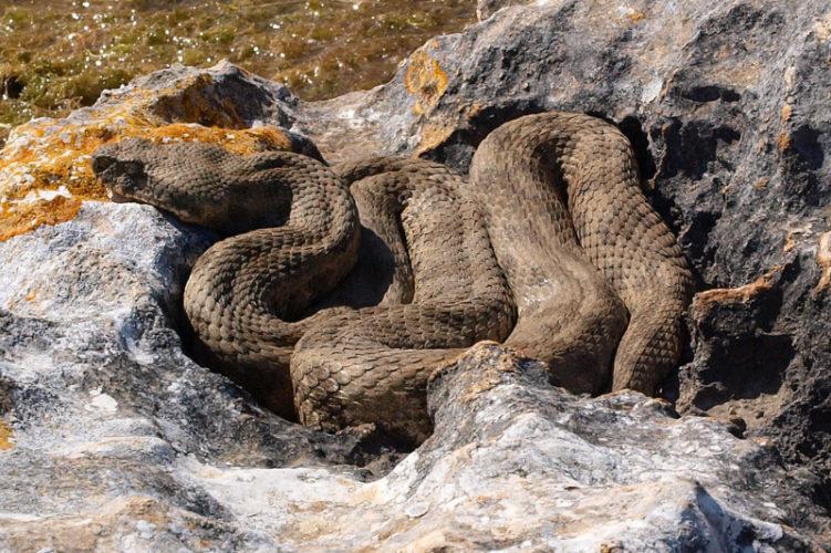 Топ 10 самые длинные змеи в мире