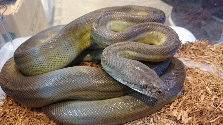 Топ 10 самые большие змеи в мире